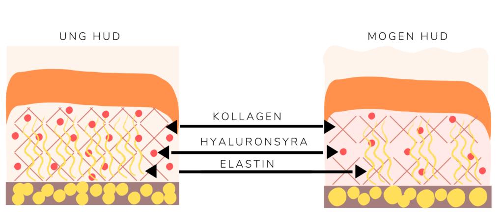 När vi blir äldre minskar produceringen av essentiella ämnen i huden
